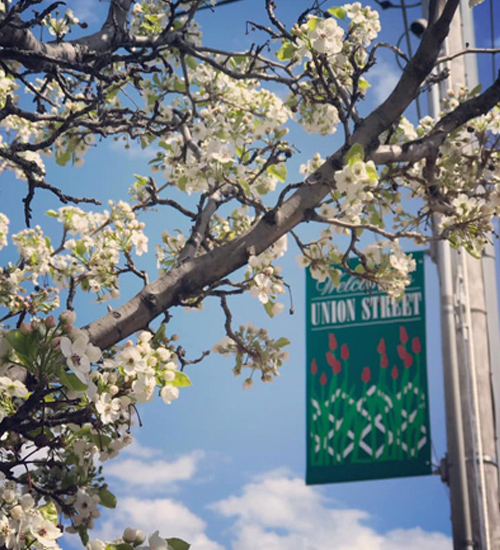 Upper Union Street sign in back of a white flowering tree